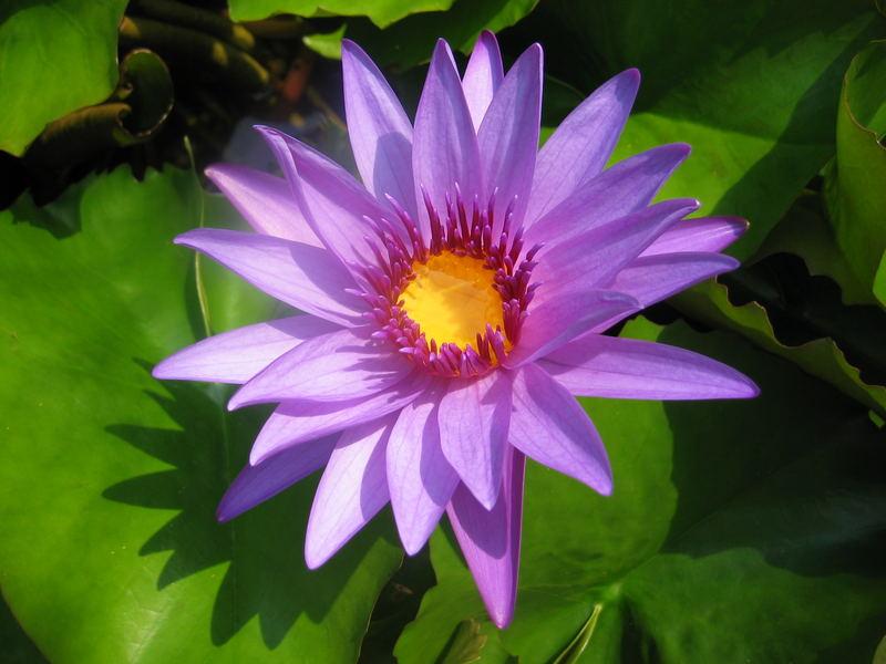und nochmal lila ...
