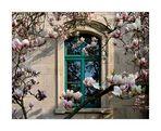 und nun magnolien aus meiningen ...