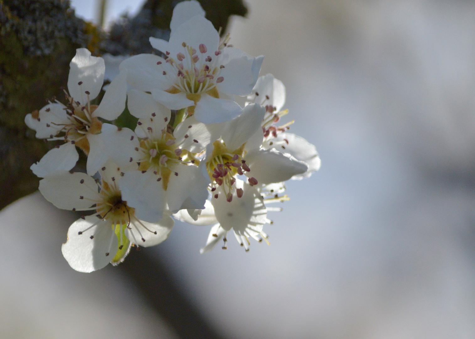 Und plötzlich dieser Frühling