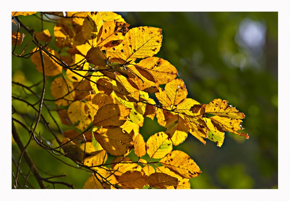 .....und plötzlich ist es Herbst