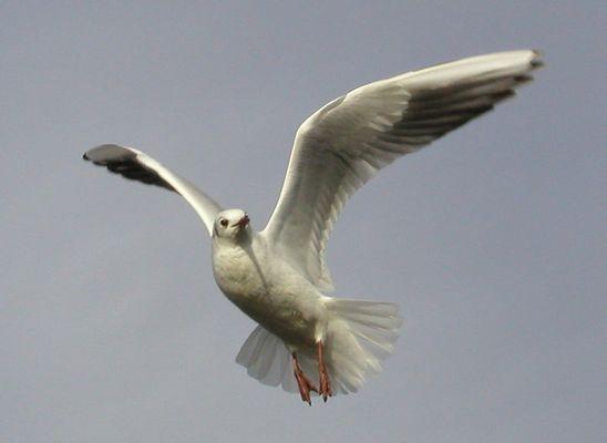 und sie fliegt und fliegt...