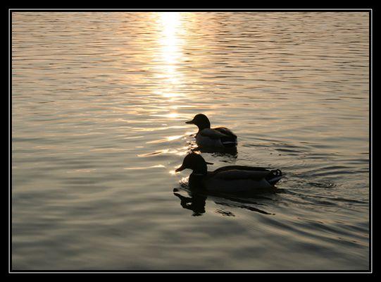 Und so schwimmen sie bis ans Lebensende...