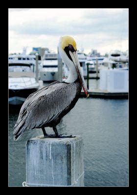 Und Stolz zeigt sich der Pelikan
