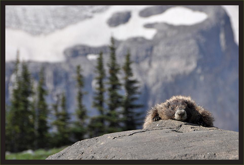 Und täglich relaxed das Murmeltier