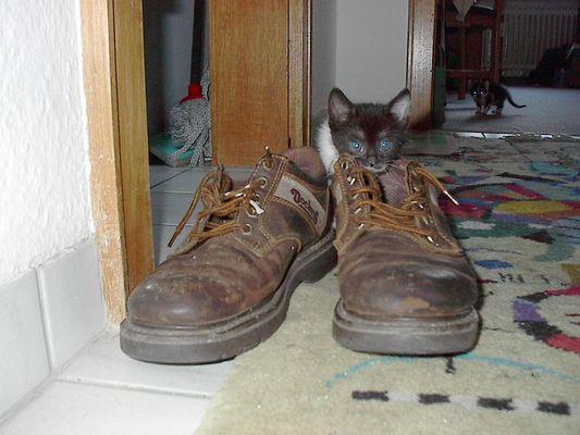 Und unser süsses Kätzchen Shila! Meine Schuhe müssen immer dran glauben!