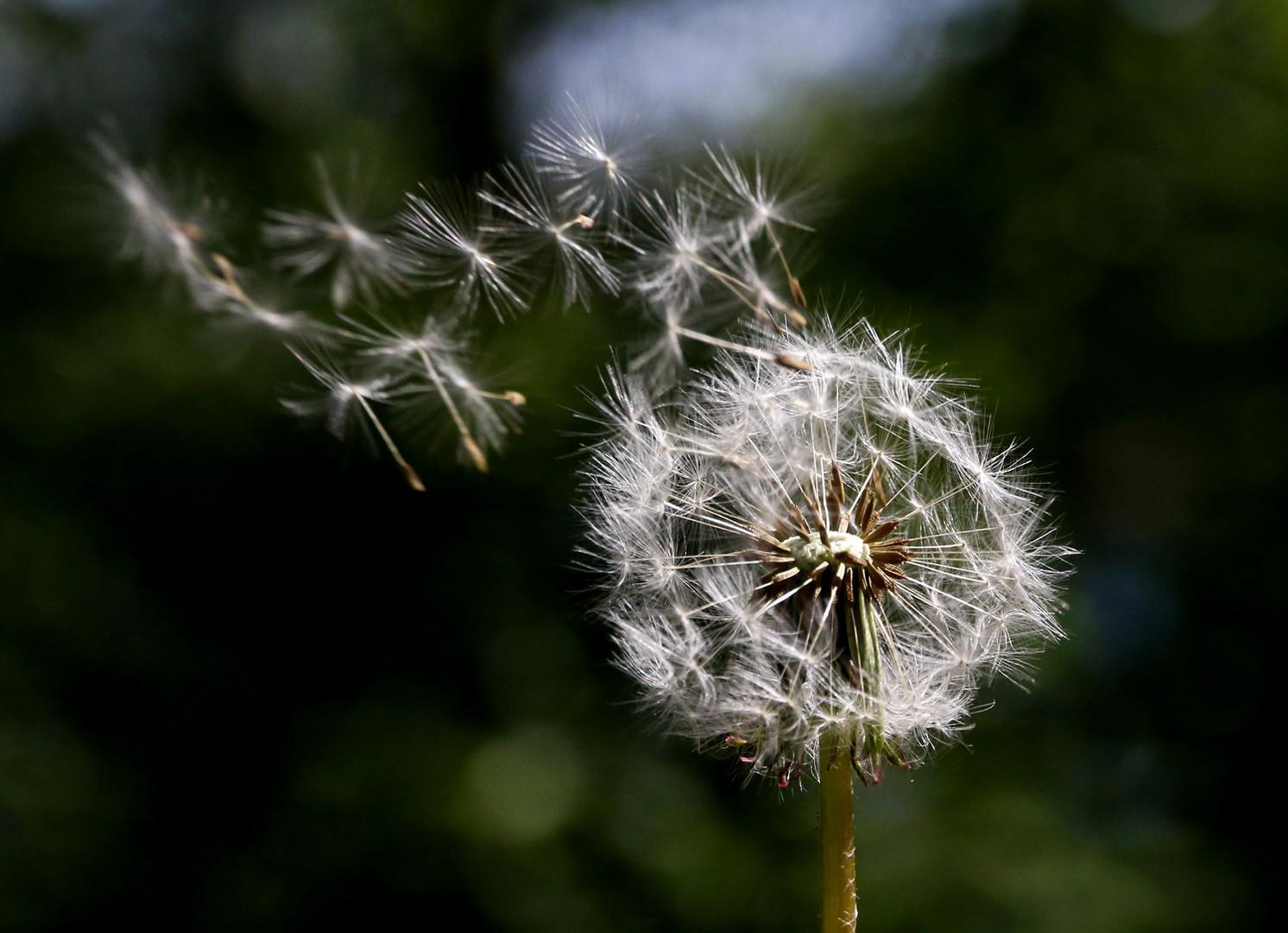Und wenn der Wind bläst, geht es auf die Reise