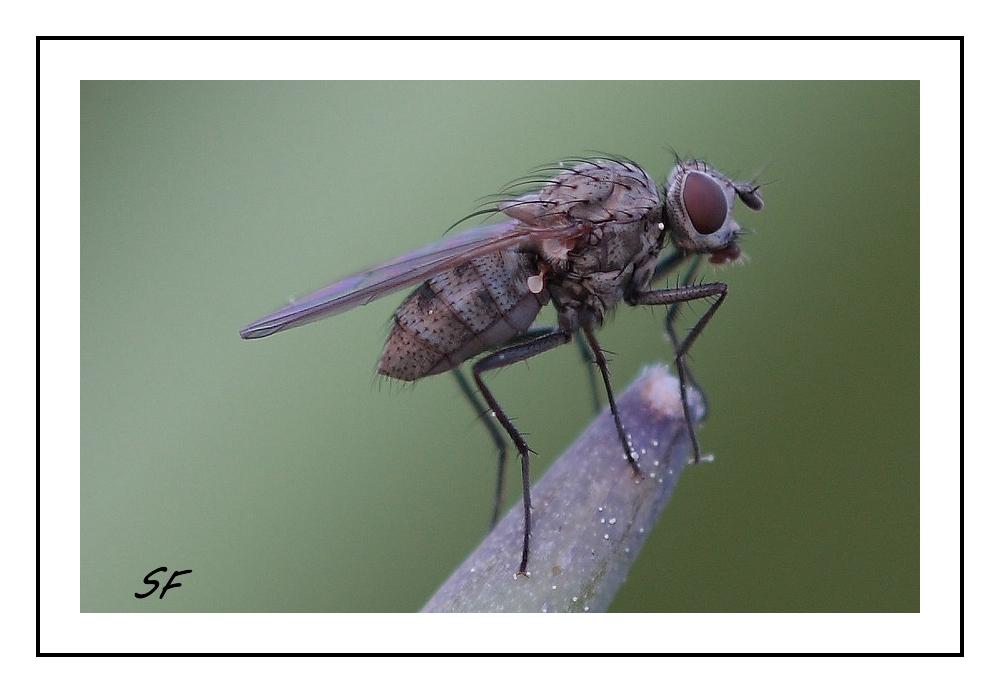 und wieder eine Fliege
