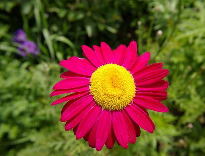 ... und wieder ne Blüte