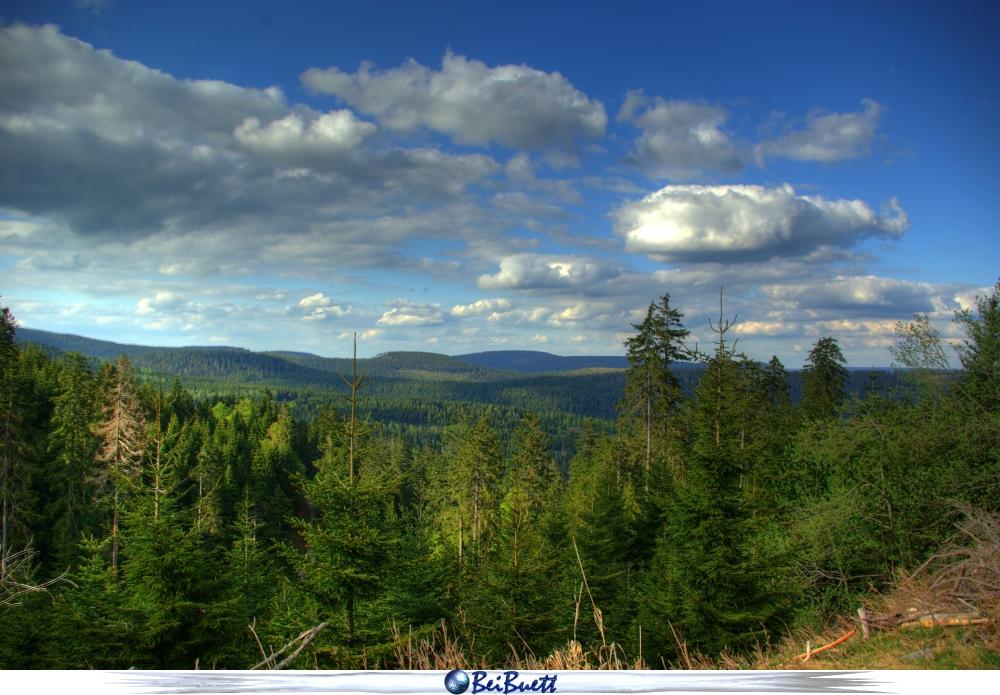 Und wieder Schwarzwald 1