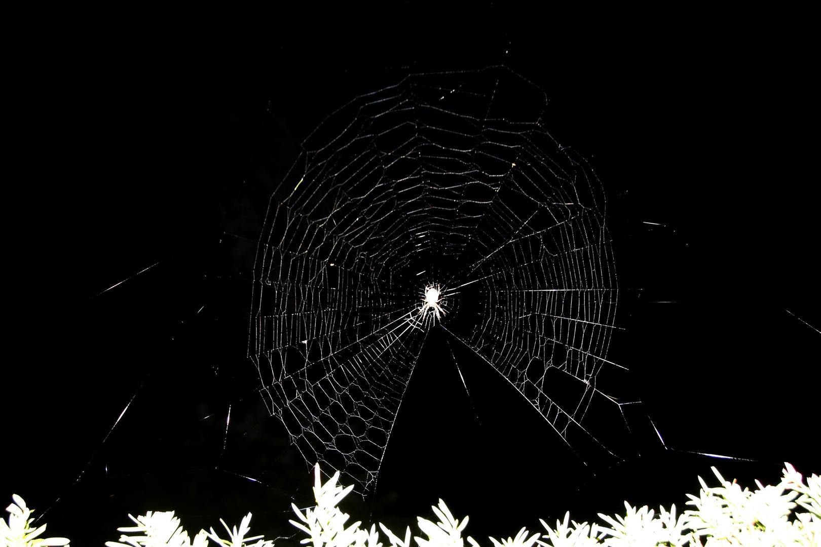 Und zu guter Letzt die Spinne zur Nacht
