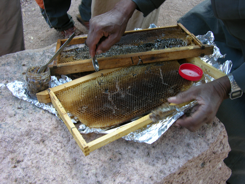 Und zum Nachtisch - Honigwaben.