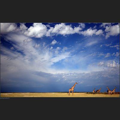 Under an African sky