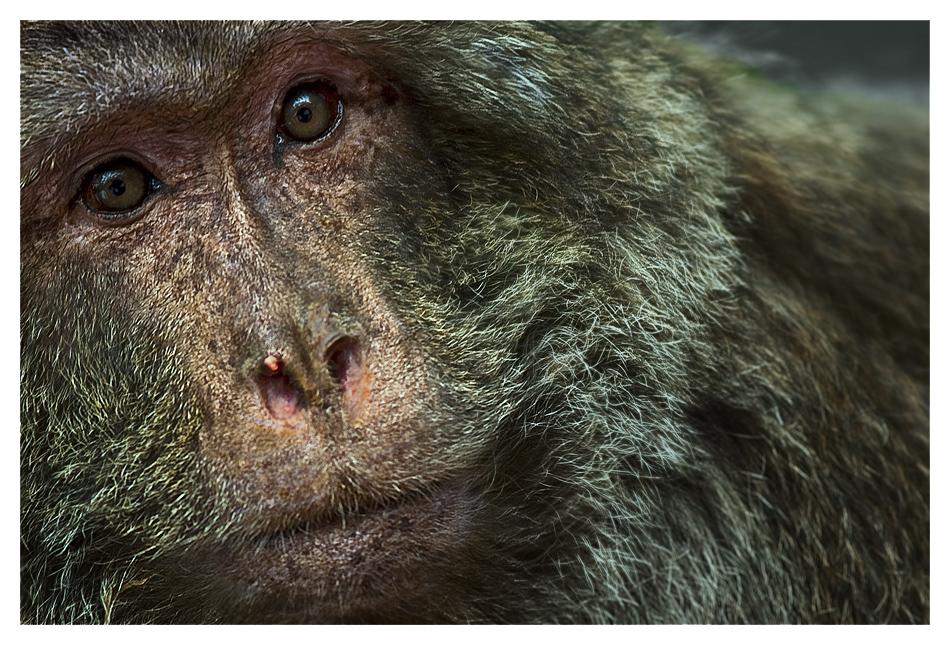 ... under Apes.