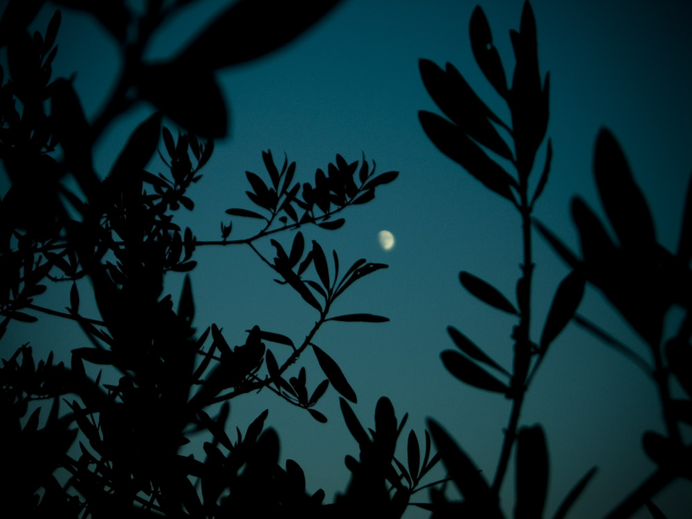Under the moon and olivetrees.