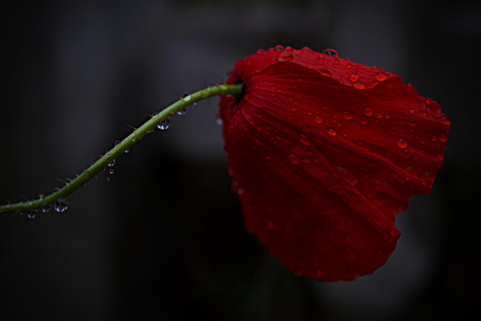 under the rain - 2