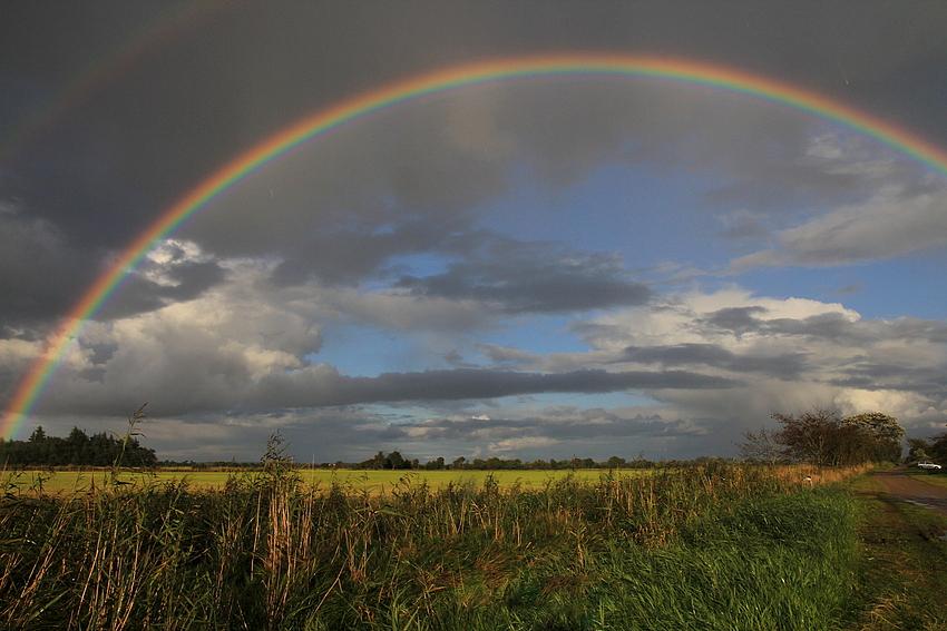 Under the Rainbows