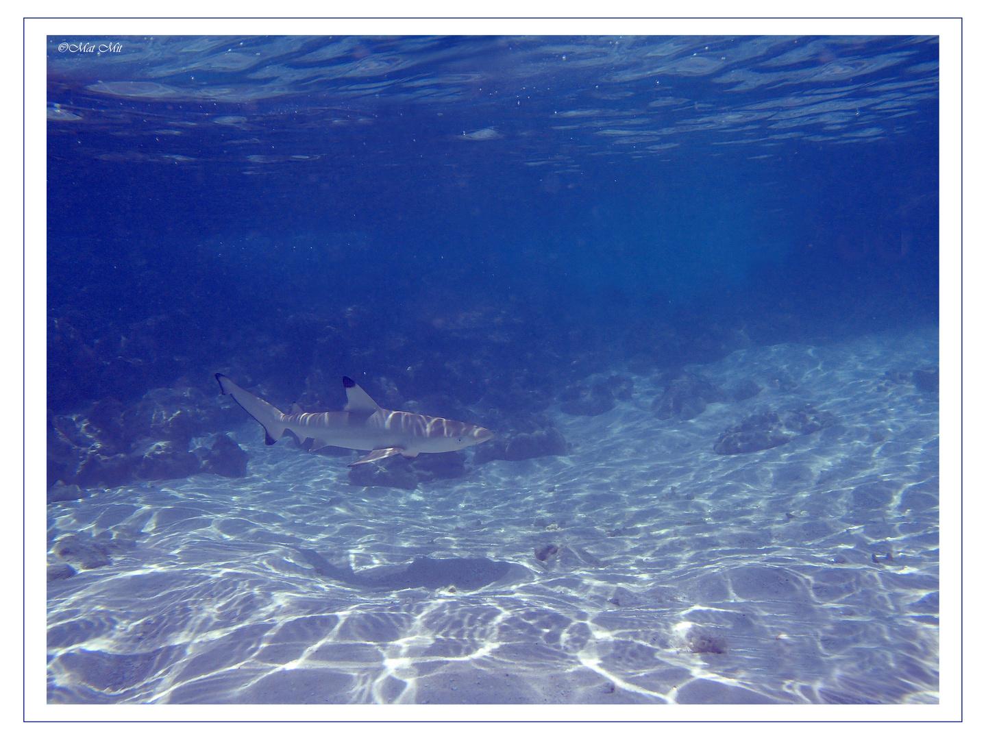 under water 14