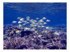 under water 21