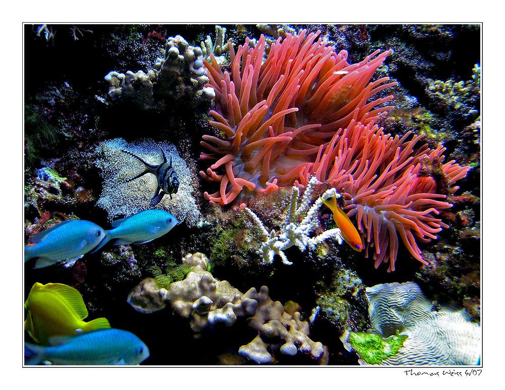 ... underwater world ...