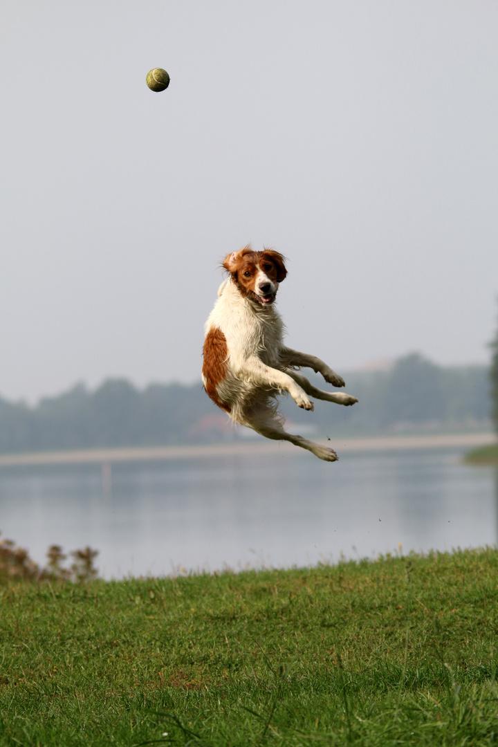 Und.......JUMP !!!!!