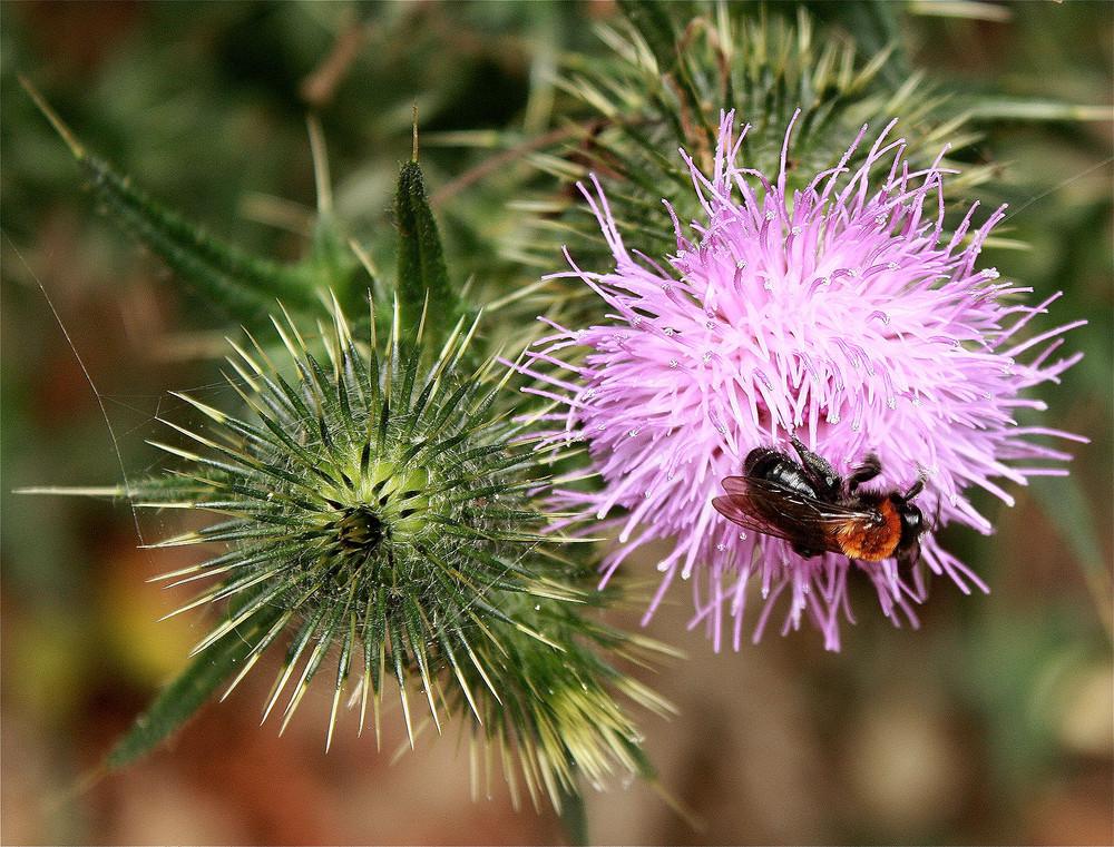 Une abeille se promenait