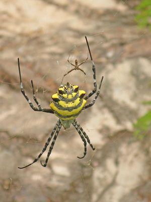 Une autre araignée!