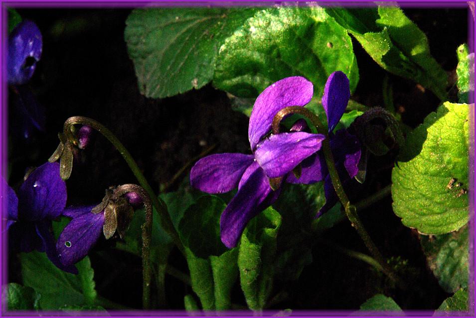 une autre fleur dans mon jardin