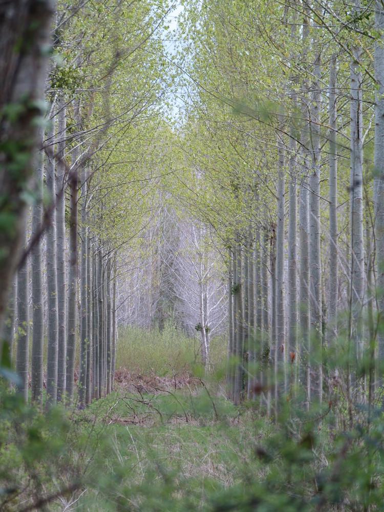 une avenue dans les bois