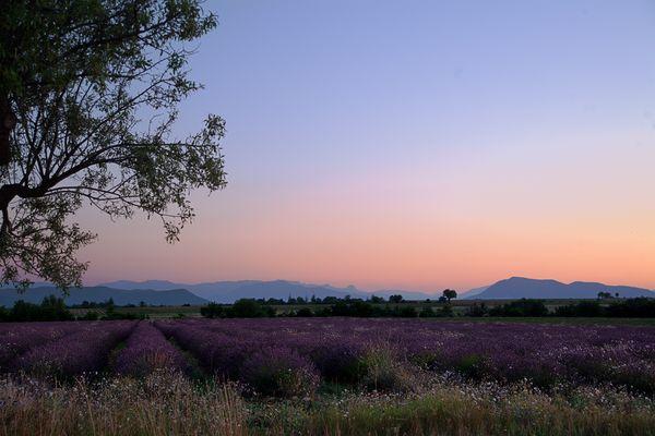 Une Balade en Provence