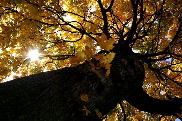 Une beau arbre