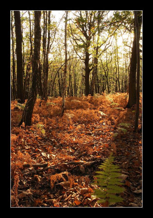 Une belle fin d'après midi d'automne...