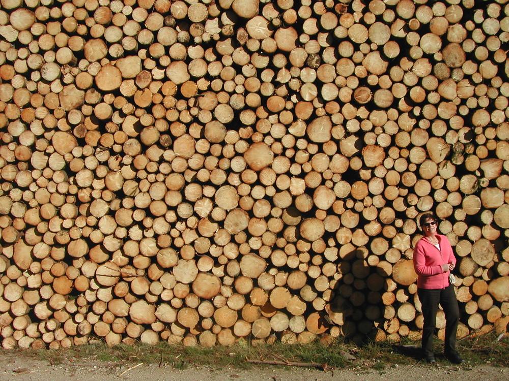 Une belle réserve de bois pour l'hiver