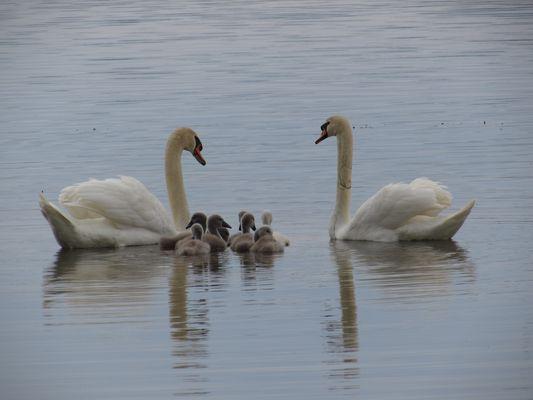 ...Une bien belle famille...
