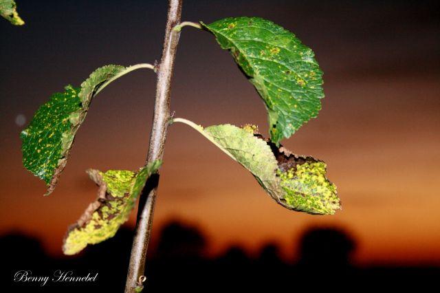 Une Branche un Soir