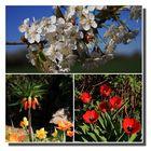 une carte postale du printemps!