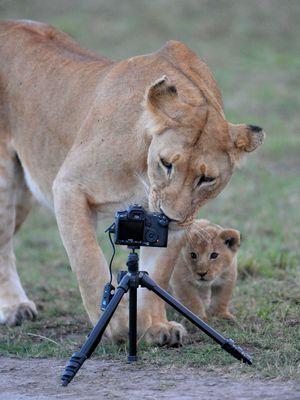 Une Certaine approche de la photo numérique animalière....