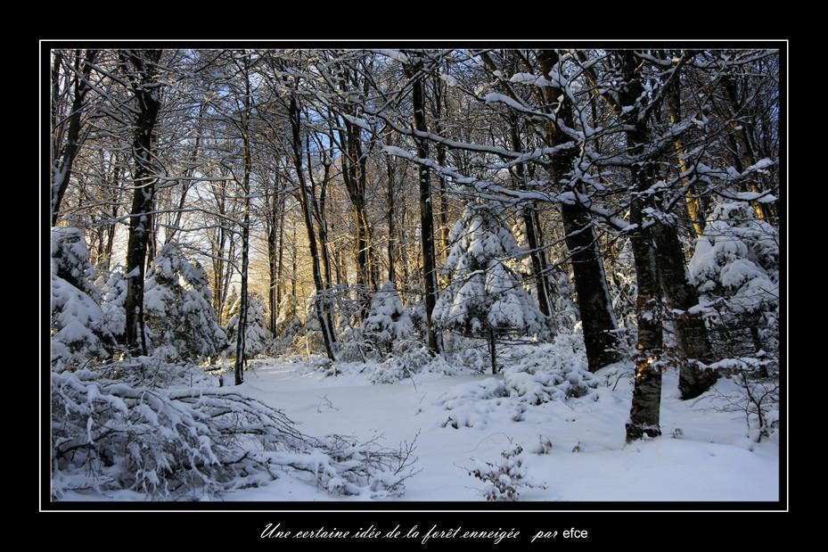 Une certaine idée de la forêt enneigée