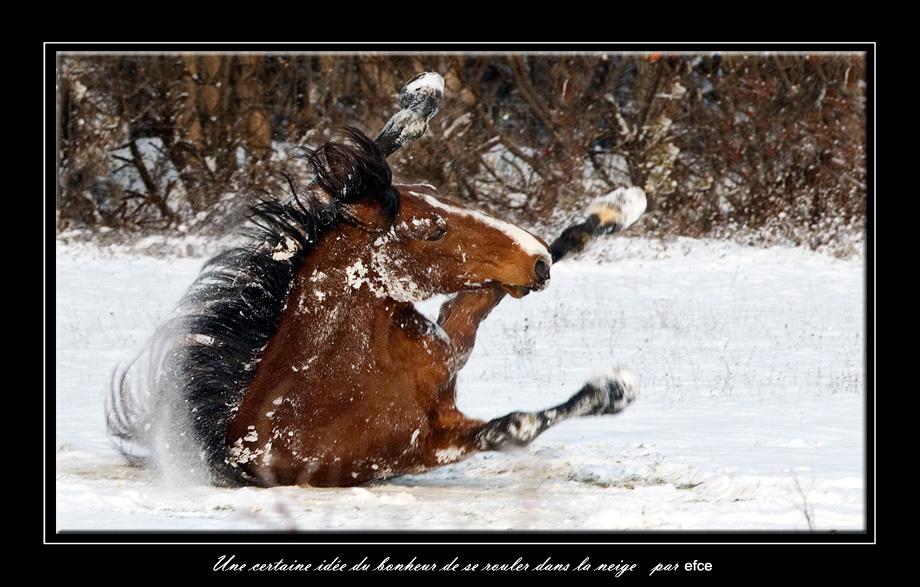 Une certaine idée du bonheur de se rouler dans la neige