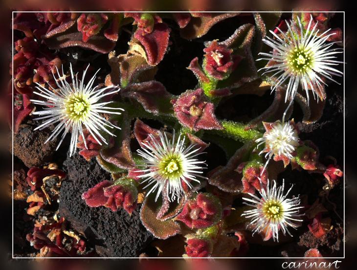 Une constellation florale / Eine Blumenkonstellation