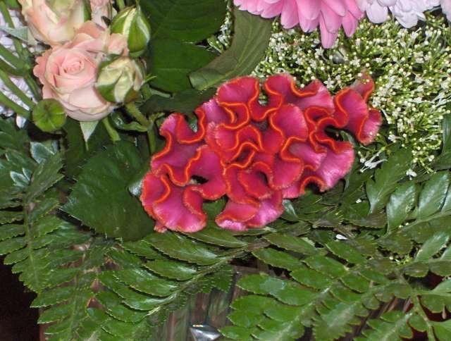une CRETE DE COQ dans un magnifique bouquet..........