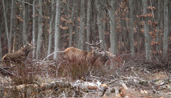 Une des dernières chasses Mars 2012