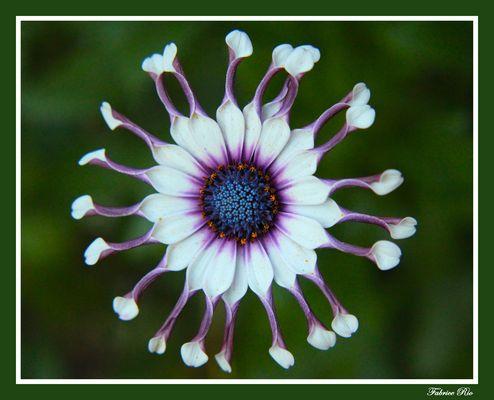 Une drôle de fleur