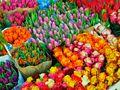 Une envie de fleurs.... von photos c-k