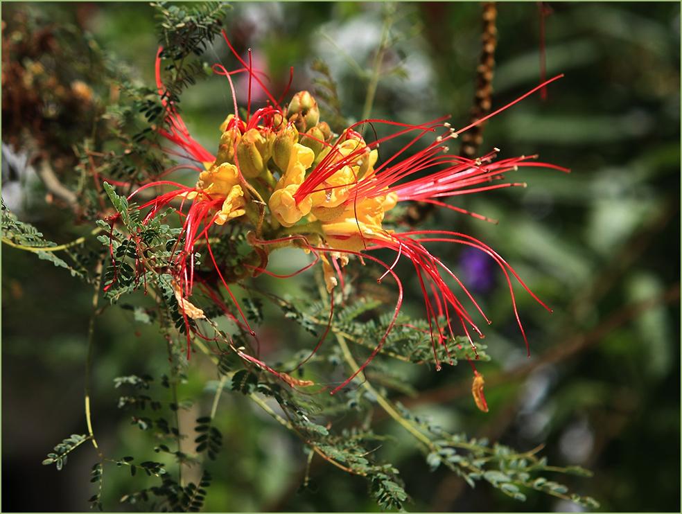 Une étrange fleur