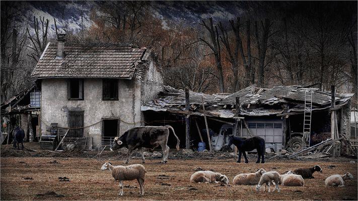 Une ferme qui se meurt