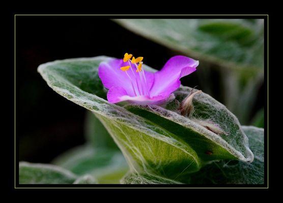 Une fleur ...