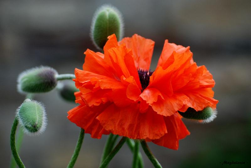 Une fleur après l'autre