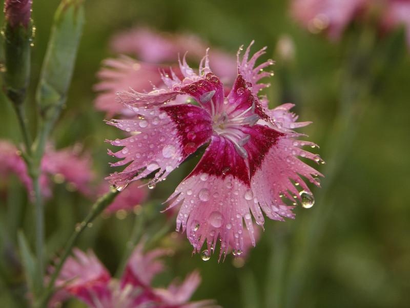 Une fleur après une averse orageuse
