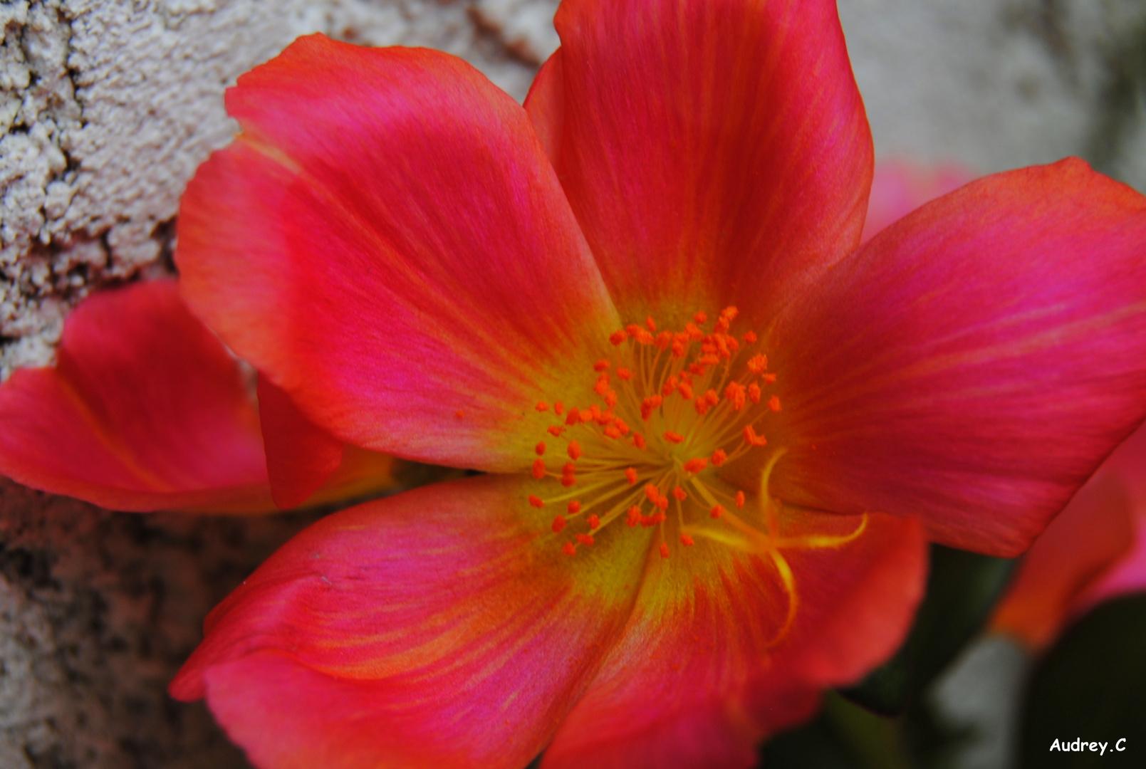Une fleur au couleur du soleil