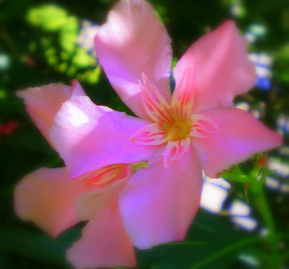 une fleur au soleil